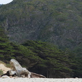 Monterey-cypress-behind-Pfeiffer-Beach-Big-Sur-2012-01-02-IMG 3838