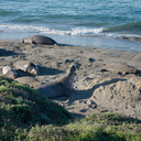elephant-seals-on-Seal-Beach-view-PCH-2016-12-28-IMG 3579