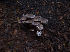 mushroom-clump-campsite-Pfeiffer-Big-Sur-2011-01-02-IMG 0319