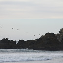 pelicans-flying-Pfeiffer-Beach-Big-Sur-2012-01-02-IMG 3853