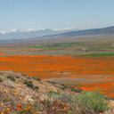 view-Eschscholtzia-californica-mountains-snow-from-Antelope-Valley-Poppy-Preserve-2010-04-23-IMG 4480