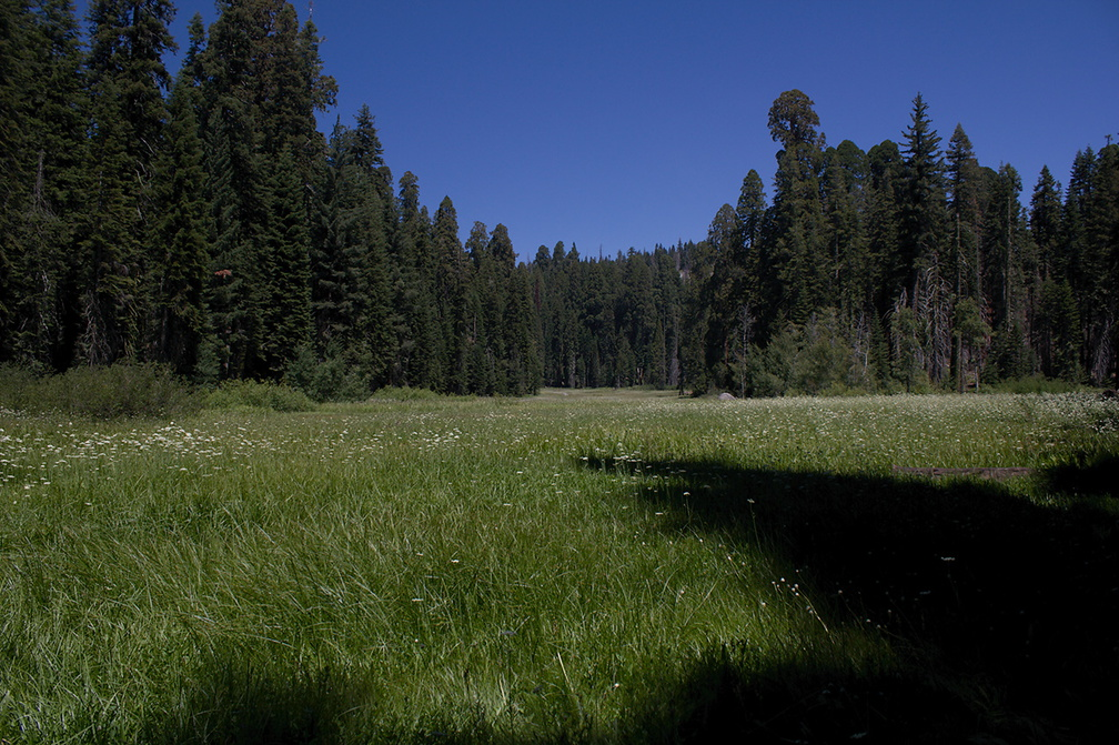 Crescent-Meadow-SequoiaNP-2012-07-31-IMG 6391