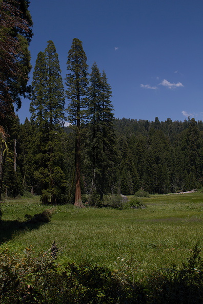 Crescent-Meadow-area-SequoiaNP-2012-07-06-IMG_5957.jpg