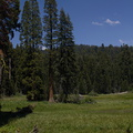 Crescent-Meadow-area-SequoiaNP-2012-07-06-IMG 5957