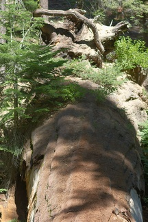 fallen-redwood-trunk-supporting-new-saplings-Crescent-Meadow-to-Museum-trail-SequoiaNP-2012-07-31
