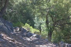 mule-deer-Bubbs-Creek-trail-Kings-CanyonNP-2012-07-08-IMG 6143