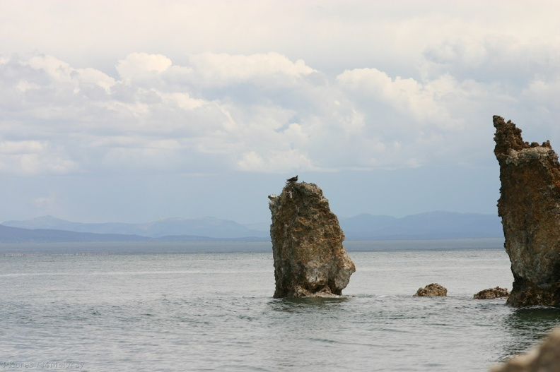 Mono Lake osprey nests on tufa1