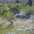 mono-lake-misty-grass-dscn3874-sm