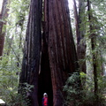 giant-redwood-with-child-from-Manitoba-for-scale-Austin-Creek-SP-2016-03-19-IMG 6654