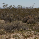 view-of-desert-area-creosote-bushes-N4-near-rte138-2015-03-30-IMG 0570