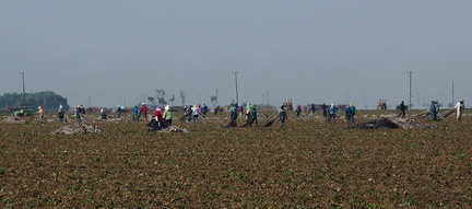 agricultural-workers-pulling-up-plastic-sheeting-from-strawberry-field-2012-07-11-IMG 2211