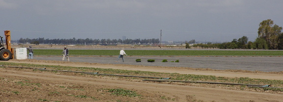 gathering-harvested-flats-Oxnard-plain-2014-05-21-IMG 3844