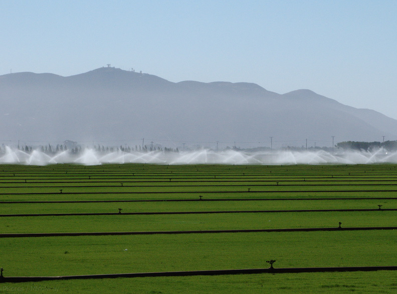 irrigating-sod-farm-2009-08-05-IMG_3260.jpg