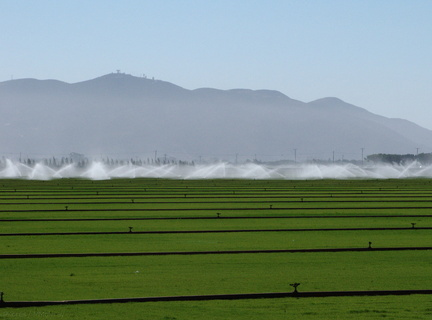 irrigating-sod-farm-2009-08-05-IMG 3260