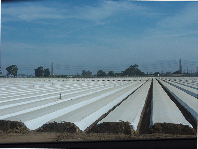 plastic-sheeting-on-strawberry-field-before-planting-2012-07-11-IMG_2212.jpg