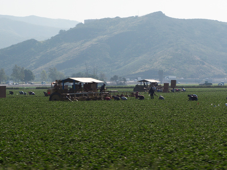strawberry-pickers-Oxnard-2010-03-23-IMG_4048.jpg