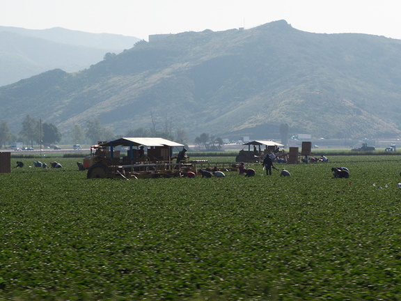 strawberry-pickers-Oxnard-2010-03-23-IMG 4048
