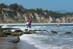 Angela-and-Paul-Heermans-gull-dark-phase-Point-Dume-tide-pools-2012-07-02-IMG 2178