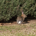 rabbit-near-Admin-2013-01-29-IMG 3395