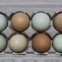 eggs-turquoise-and-brown-2012-05-05-IMG 1709