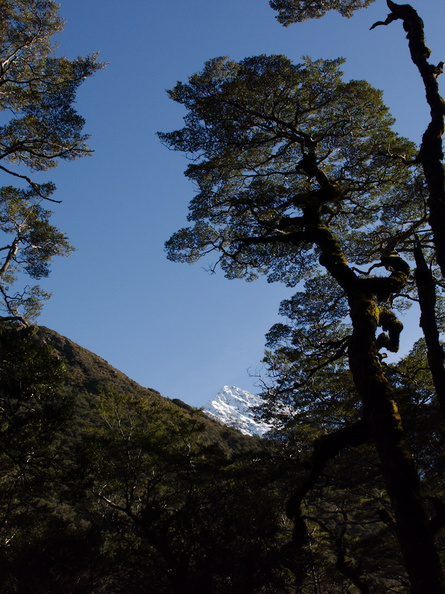 mountain-view-Nothofagus-beech-forest-Bealeys-Valley-Arthurs-Pass-2013-06-14-IMG 1497