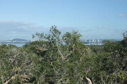 Auckland-from-Rangitoto-summit-track-26-07-2011-IMG 3181