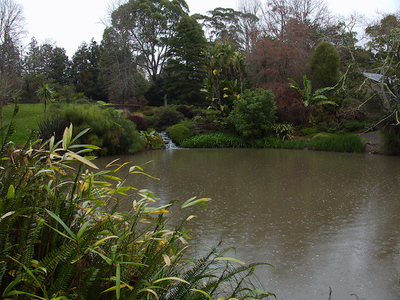 Ollies-Pond-with-papyrus-Ayrlies-Garden-Auckland-2013-07-03-IMG_2223.jpg