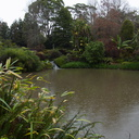 Ollies-Pond-with-papyrus-Ayrlies-Garden-Auckland-2013-07-03-IMG 2223