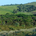 lowland-wetland-forest-from-campsite-Tawharanui-2013-07-07-IMG 2405