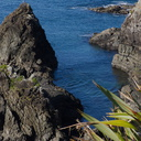 sea-cliffs-and-seal-Tokatu-Pt-Tawharanui-2013-07-07-IMG 2418