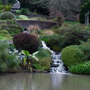 waterfalls-to-Ollies-Pond-Ayrlies-Garden-Auckland-2013-07-03-IMG 8809