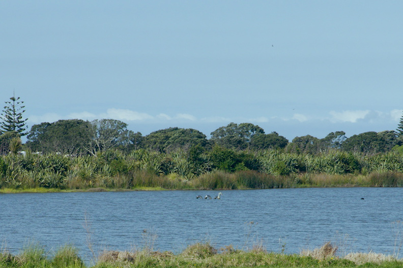 Nessie-has-moved--Matata-Reserve-New-Zealand-2015-10-14-IMG 5777