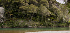 Waimana-River-at-rest-stop-in-Reserve-on-Rte2-2015-10-15-IMG 5768
