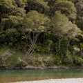 Waimana-River-at-rest-stop-in-Reserve-on-Rte2-2015-10-15-IMG_5768.jpg