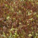 reddish-and-pale-green-moss-growing-together-Tarawera-Outlet-to-Humphries-Bay-Track-2015-10-17-IMG 5897