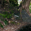 tree-root-breaking-rock-Tarawera-to-Waterfall-Track-2015-10-16-IMG 5867