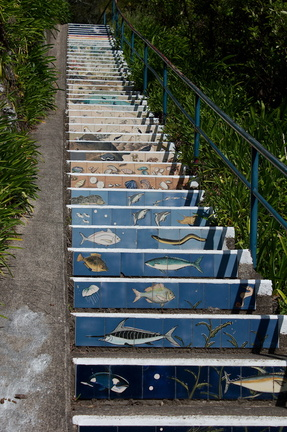 vertigraph-sea-to-mountain-biomes-cliff-walk-Whakatane-2015-10-20-IMG 2167