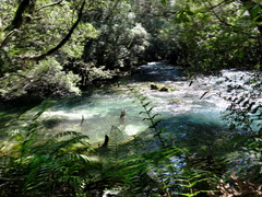 view-of-river-Tarawera-to-Waterfall-Track-2015-10-16-IMG 5815