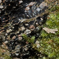 volcanic-glass-obsidian-pebbles-and-rocks-Tarawera-to-Waterfall-Track-2015-10-16-IMG 2012