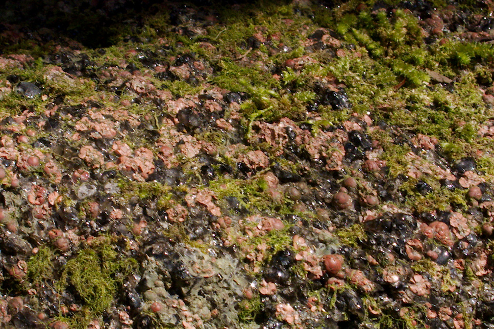 volcanic-glass-obsidian-pebbles-and-rocks-Tarawera-to-Waterfall-Track-2015-10-16-IMG 5855