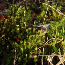 moss-on-forest-track-Denniston-2013-06-12-IMG 1326