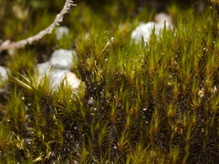 moss-road-to-Denniston-2013-06-12-IMG 8084
