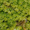 moss-road-to-Denniston-2013-06-12-IMG 8092