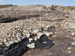 shale-and-coal-visible-in-surface-rock-Denniston-plateau-2013-06-12-IMG 1369