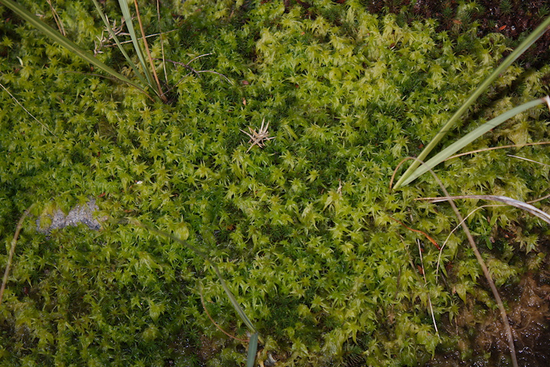 sphagnum-moss-road-to-Denniston-2013-06-12-IMG_8064.jpg