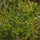 sphagnum-moss-road-to-Denniston-2013-06-12-IMG 8064