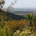 view-north-out-over-kowhai-grove-Kauri-Grove-trail-Kaitaia-2015-09-13-IMG 1320