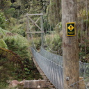 suspension-bridge-Waitawheta-Tramway-Track-2015-10-10-IMG 1922