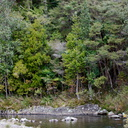 view-of-river-Waitawheta-Tramway-Track-2015-10-10-IMG 1929