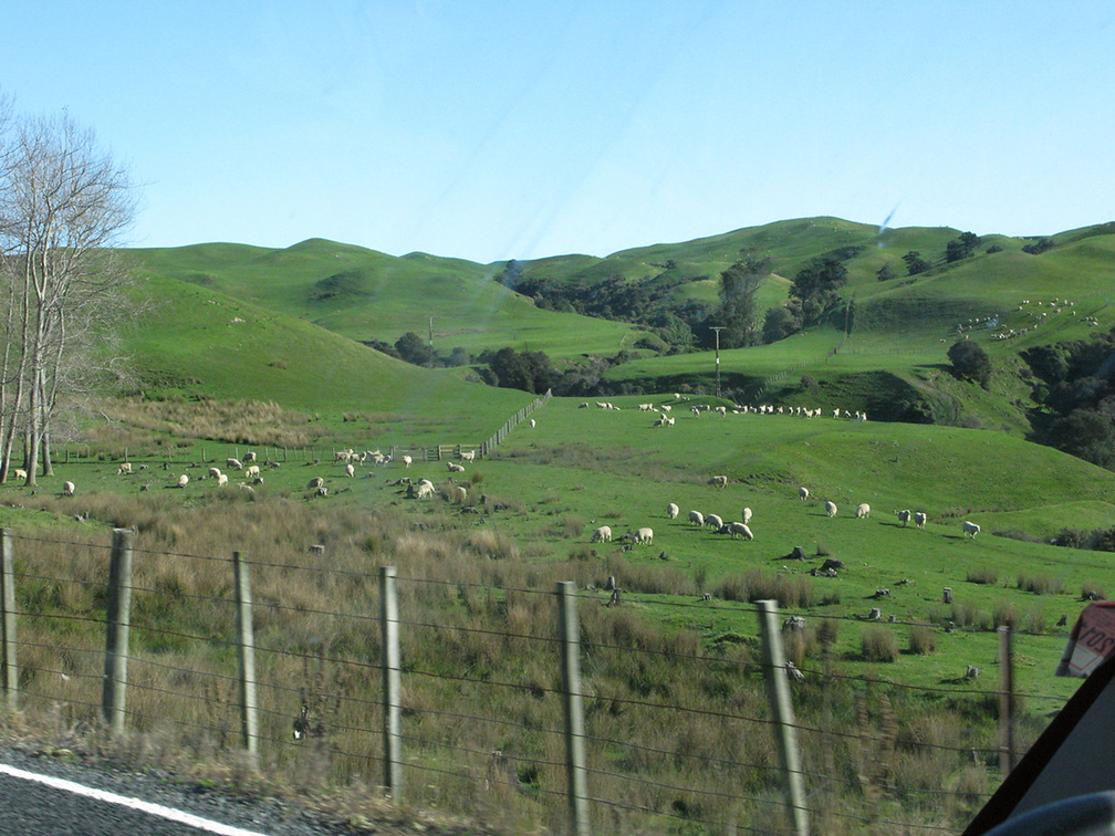 road-SH2-south-of-Napier-sheep-on-hills-13-06-2011-IMG 8476